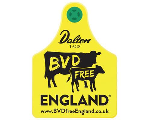 BVD Free England