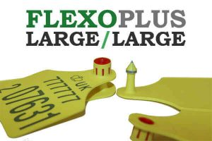 flexo-large-large2