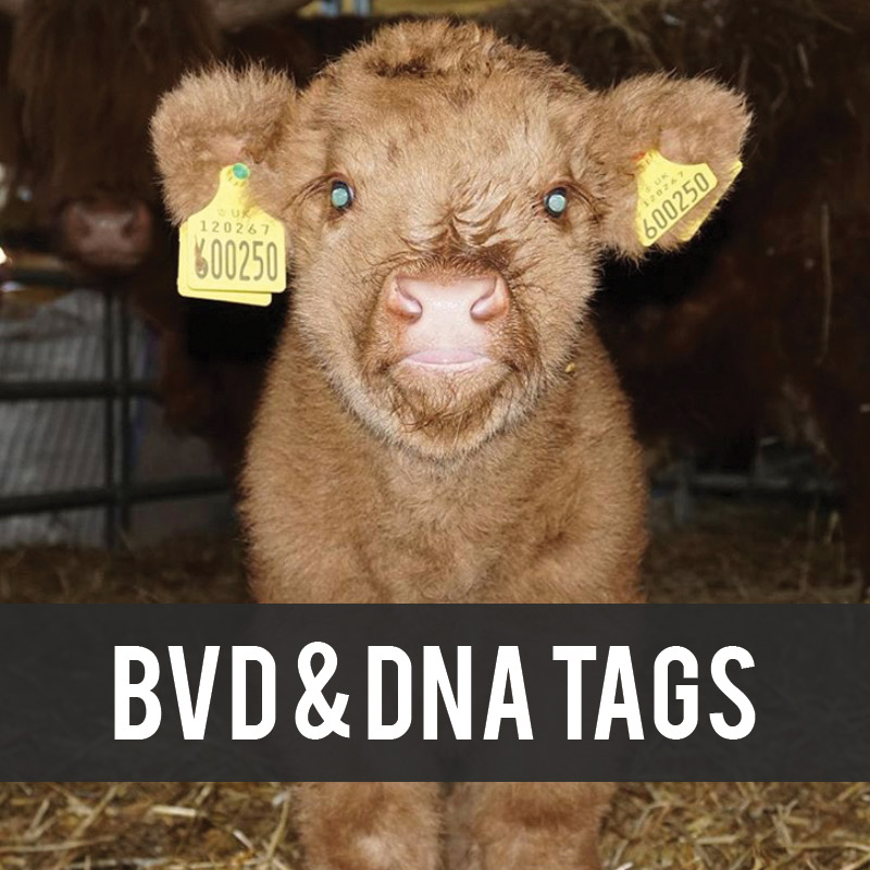 BVD and DNA Tags